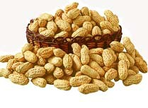 ISO Certified Groundnut