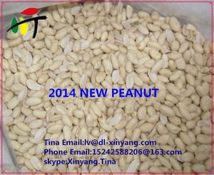 groundnut shell powder/raw peanut/blanched peanut kernel price