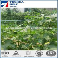 PE ,PP plant support netting / climbing mesh get through ISO 9001