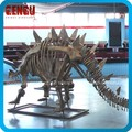 Dinosaur Skeleton Replicas exhibited in Museum