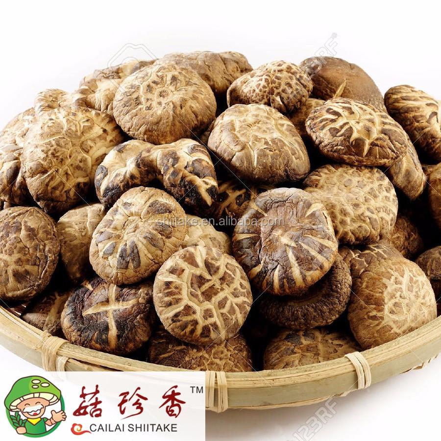 k nstlich angebaut arten von chinesischen pilze dehydrierte shiitake pilz maitake champignon. Black Bedroom Furniture Sets. Home Design Ideas