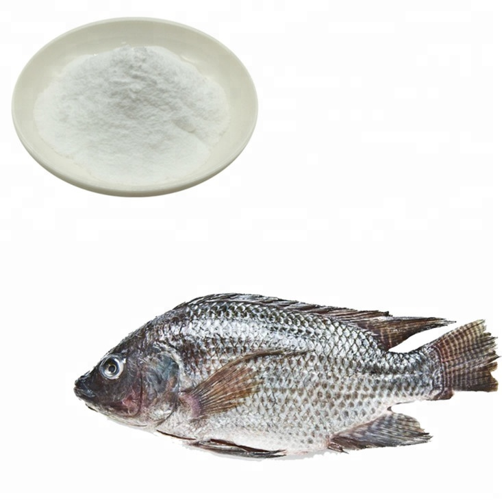 GMP Factory Supply Top Quality Tilapia Fish Collagen Protein Peptide