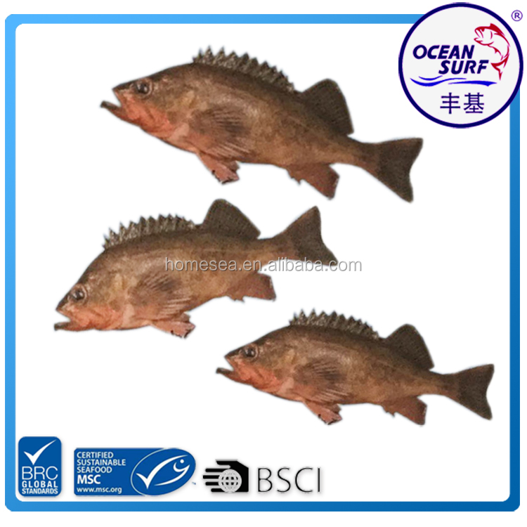 New Arrival Northern Rock Fish