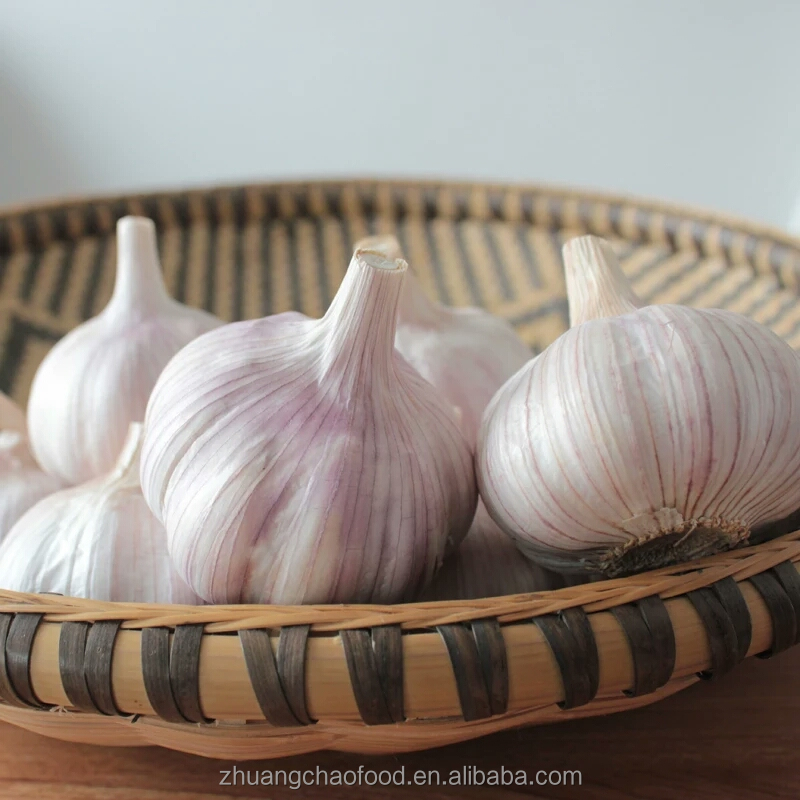 Chinese farm normal white fresh garlic