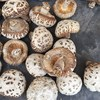 Xiang gu High quality natural bulk dried mushrooms for sale