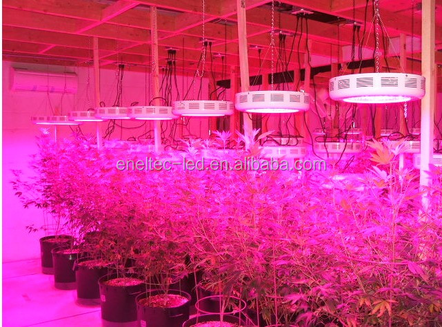 3 Years Warranty 180w Hans Panel Led Grow Light