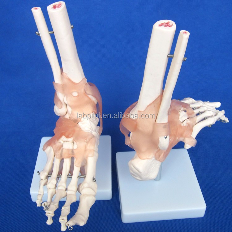 Caliente serie conjunta modelo humano, hombro, codo, cadera, rodilla ...