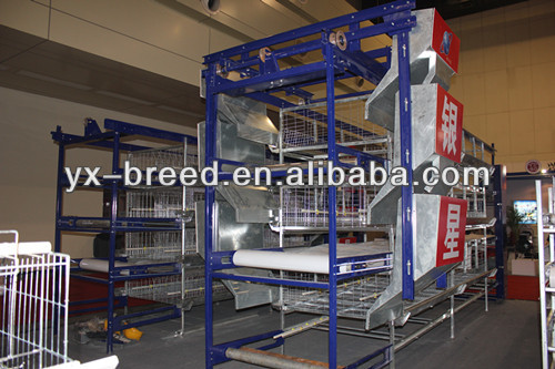 4 tier 240 layers chicken cage with auto manure clear system
