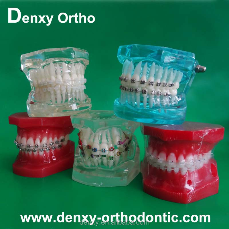 Ce Approved Dental Model Teeth Model Cavity Preparation Tooth Model ...