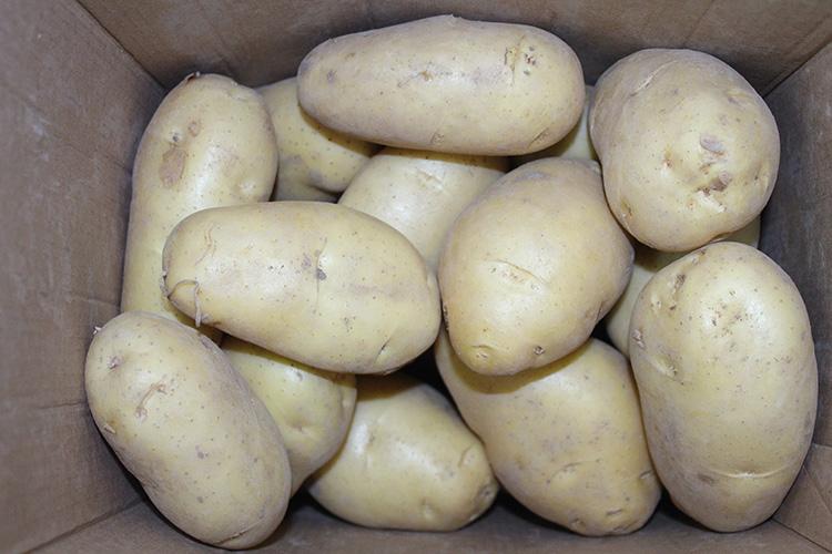 Verse Holland Aardappelen Zaden Prijs Voor Groothandel