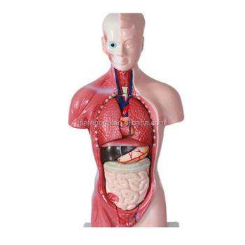 2020 Laboratorium Model Anatomi Manusia Batang Di Organ Visceral Dengan Sistem Jantung Struktur Buy Laboratorium Anatomi Manusia Model Organ Dalam Tubuh Manusia Manusia Batang Di Organ Visceral Dengan Sistem Jantung Struktur Product