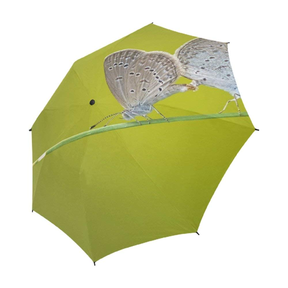 Cheap Butterfly Umbrella, find Butterfly Umbrella deals on line at ...