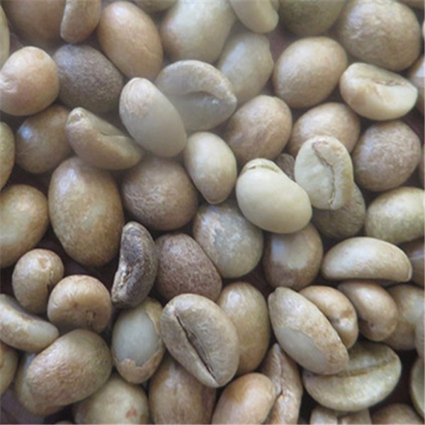 Arabica And Robusta Coffee Beans 14/15/16/17 Mixed Sizes - Fob ...