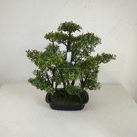 small bonsai tree wholesale