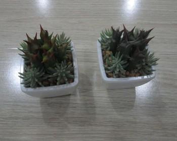 Murah Mini Buatan Kaktus Succulents Tanaman Bonsai Dalam Ruangan Bonsai Tanaman Plastik Buy Mini Sansevieria Tanaman Indoor Bayi Tanaman Kaktus Mini