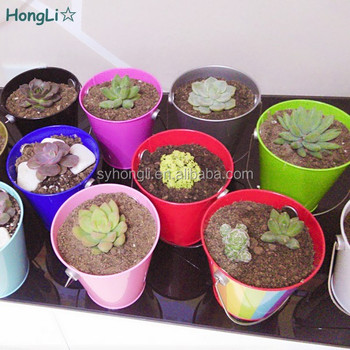 Christmas Succulent Gift.Party Gift Metal Tin Bucket Pail For Succulent Plants Buy Christmas Metal Pail Decor Tin Buckets Pails Decorative Decorative Buckets Pails Product