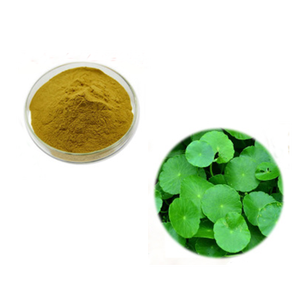 High Quality Nature Plant 20% 40% 80% Total Triterpenoid Glycosides Gold Coin Grass Extract Powder