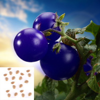 DIY Home Garden 1 Bag 20 seeds Purple Tomato Seed Pack Vegetable