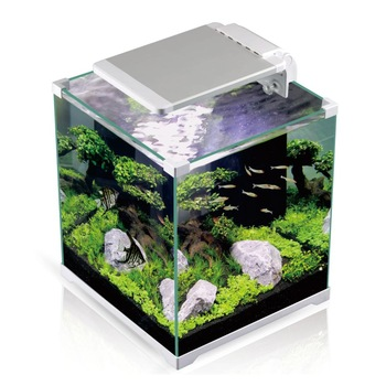 Unduh 910 Koleksi Background Hitam Aquarium Paling Keren
