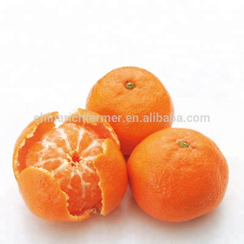 China Fresh Orange Mandarin Fruit Price