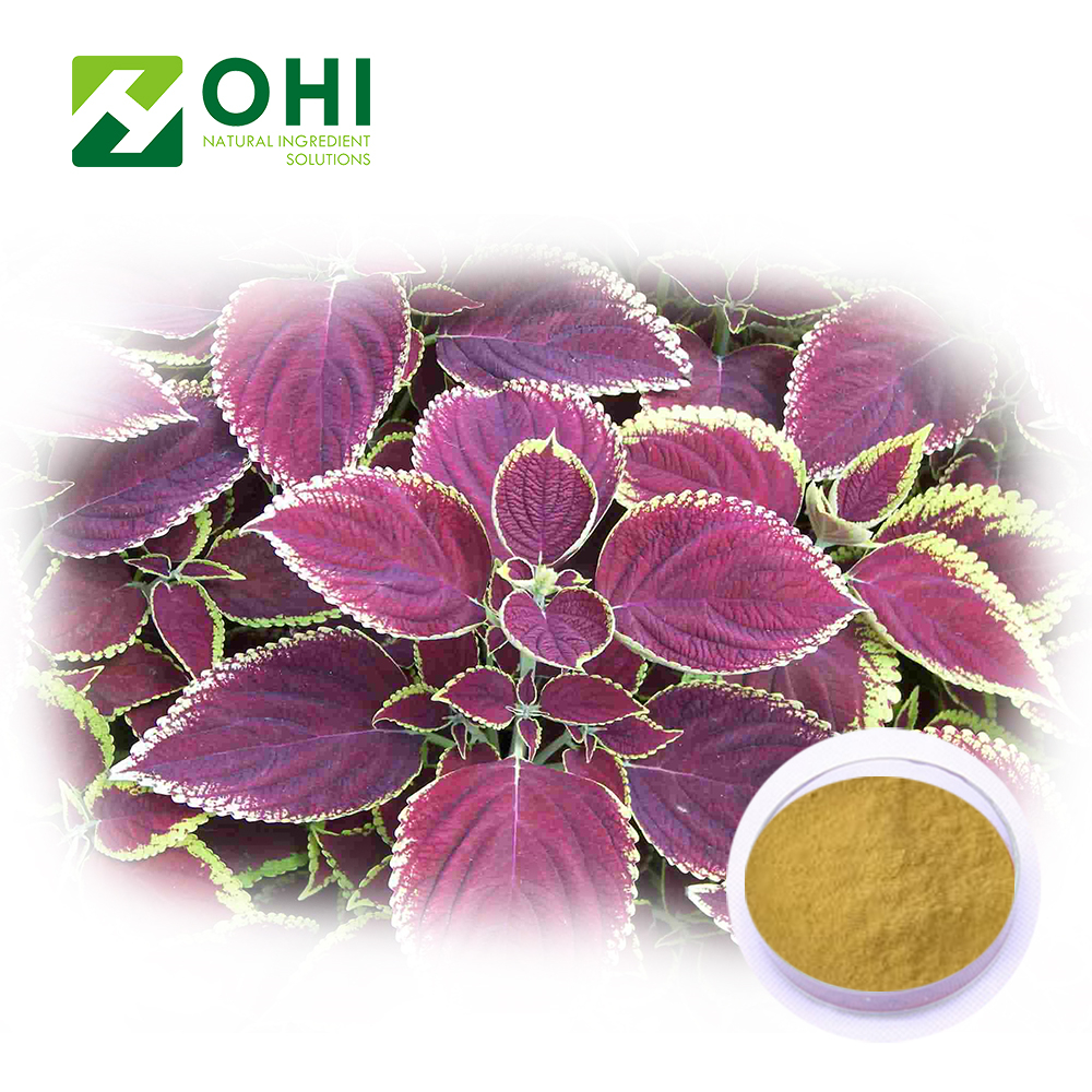 High Quality Natural Perilla Extract Perilla Frutescens Seed Oil Powder