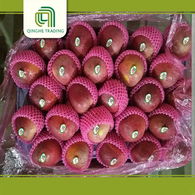 hot selling new brand china apple fruit fresh red delicious qinguan apple