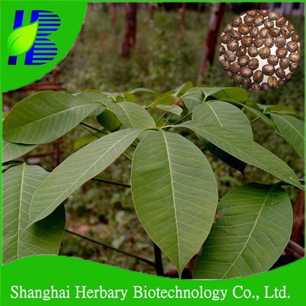 2018 Agricultural Seeds Rubber Tree Seeds For Planting - Buy Fast Growing  Plant Seeds,Tropical Tree Seeds,Plant Seed Product on Alibaba com