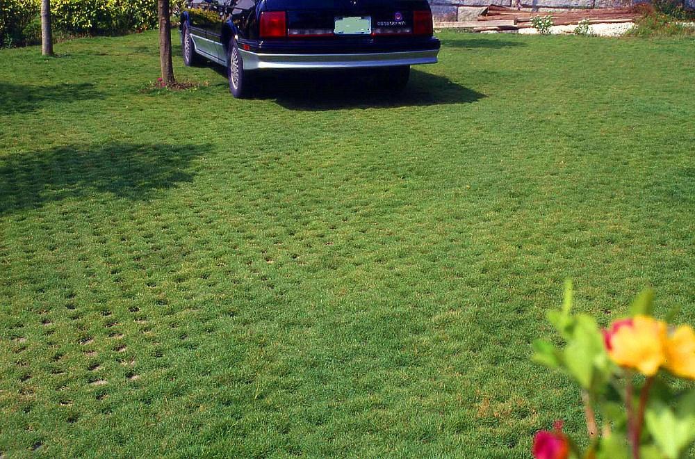 Plastic Paver Grid Driveway Hdpe Porous Grass Grid Grass