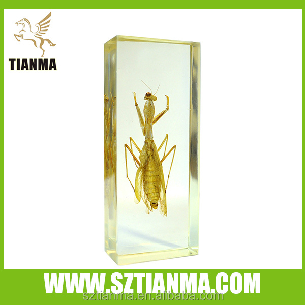 Plexiglass specimen with grasshopper inside factory