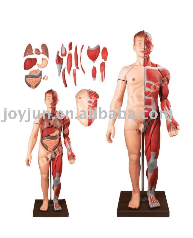 selling human organs