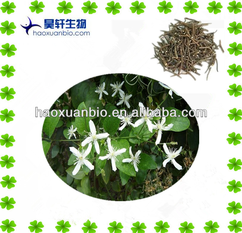 100% Natural Radix Clematidis extract 5:1 10:1