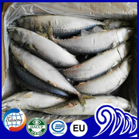 Wholesale cheap seafood frozen fresh pacific mackerel fish whole round