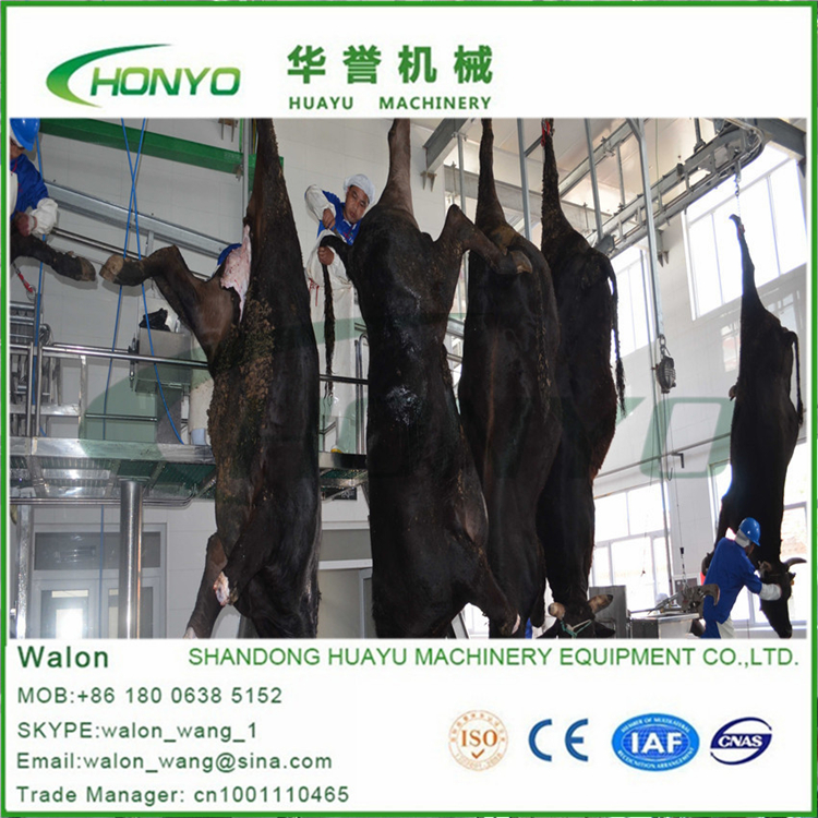 Cheap cattle slaughter production line design