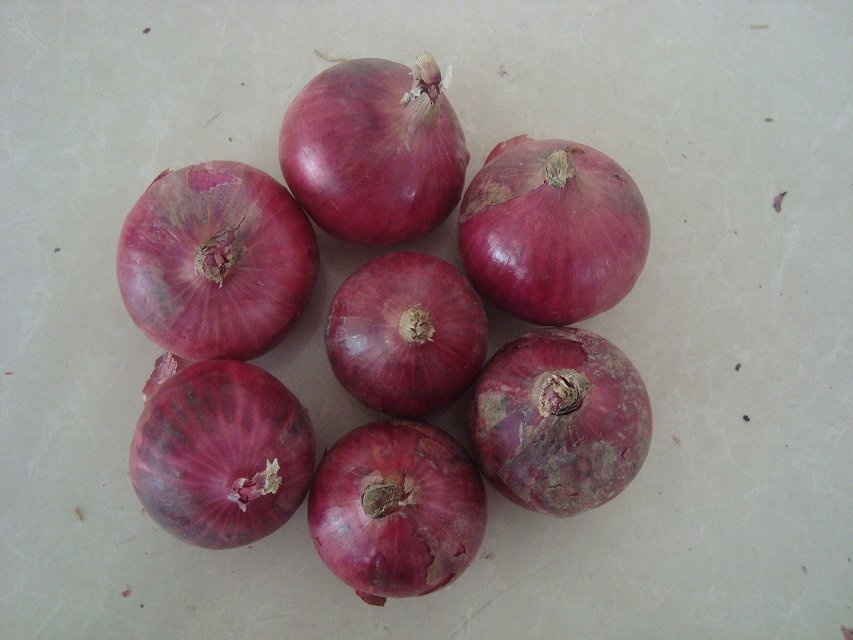Hot sales fresh yellow red onion is popular in Israel