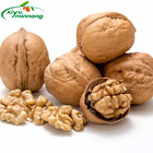 Iranian China Walnuts wholesale in thin and paper shell