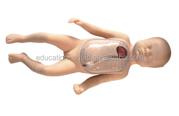 SE35242 Neonatal Peripheral and Central Vein Intubation Model
