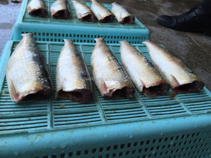 New Fishing of IQF or BQF Frozen Sardine HGT For Canning