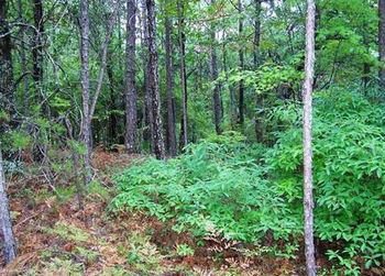 0.51 Acres of USA Land Lot for Sale: Anniston, Alabama 36207 (Real Estate-Construction-Property-Plot) 0.2063 Hectares