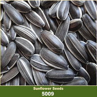 Confectionary White Striped Black Sunflower Seed in Shell