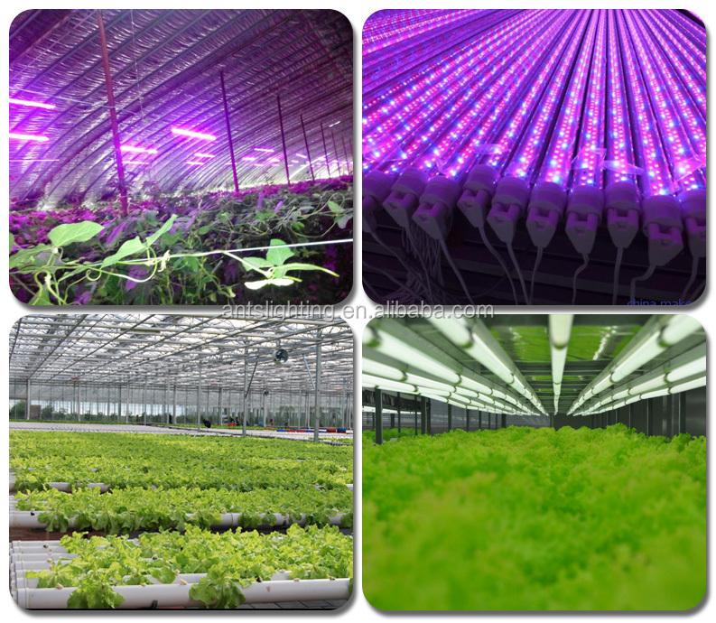 Alibaba Express China 800 Watt Led Grow Light,E27 Led Grow Light ...