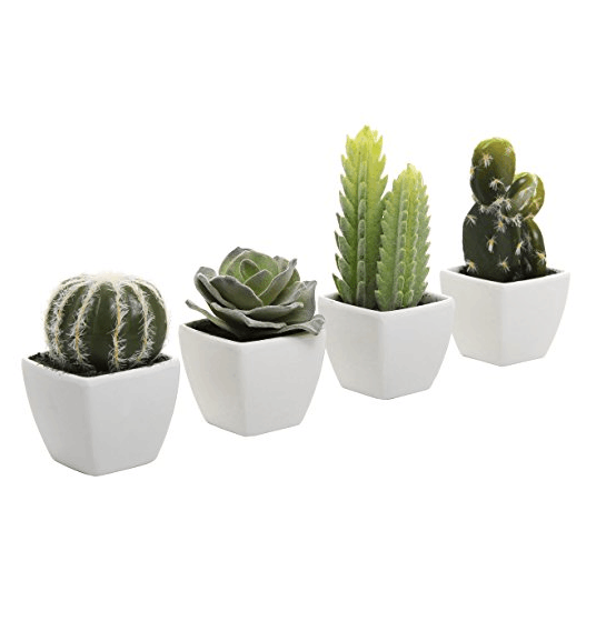 Mini Indoor Cactus Plants In White Cube Shaped Ceramic