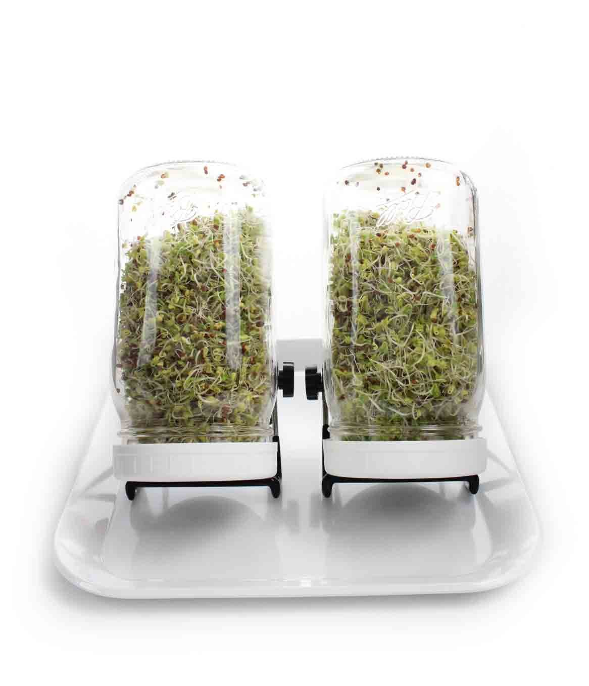 Sprouting Kit Deluxe Set includes 2 Ball Glass Quart Jars, 2 Speed Strainer Sprouting Lids, 2 Foldable Jar Stands, Tray, and Sprout Directions