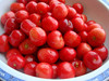 New crops Canned cherry for sale