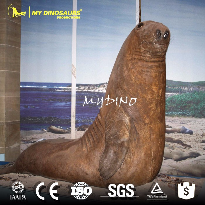 MY Dino-M24-3 Marine Museum Exhibition Artificial Animatronic Animal Manufacturer