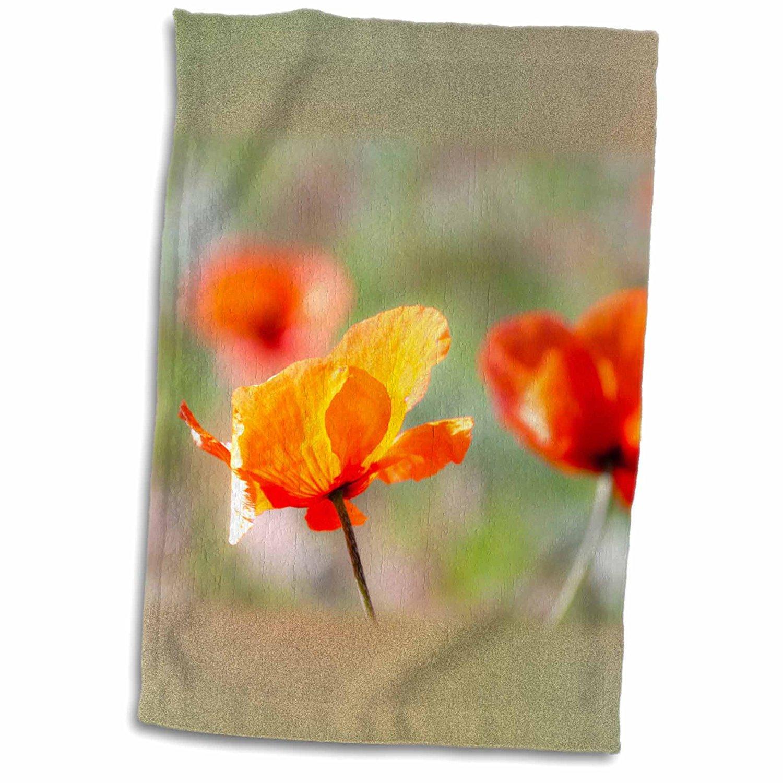 3dRose Danita Delimont - Flowers - Fire Poppy flowers, Palouse, Washington, USA - US48 TEG0430 - Terry Eggers - 12x18 Towel (twl_148732_1)