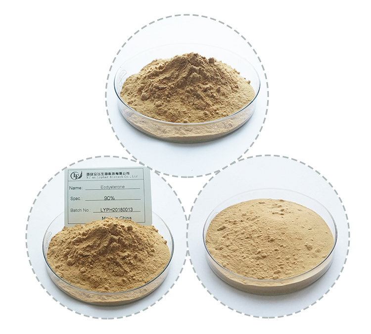 Bulk Price Cyanotis Vaga Extract 95% Beta Ecdysterone