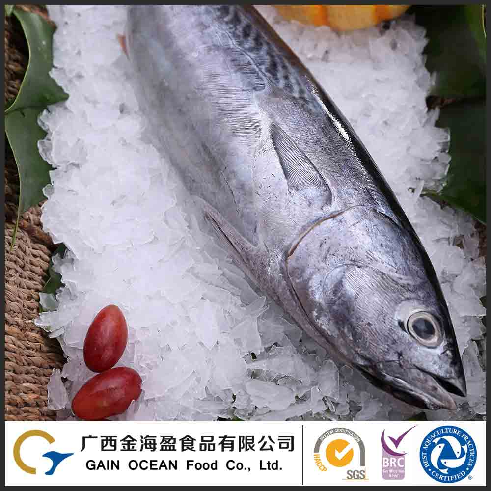 Natural Sea Caught Frozen Whole Golden Pompano Fish Seafood
