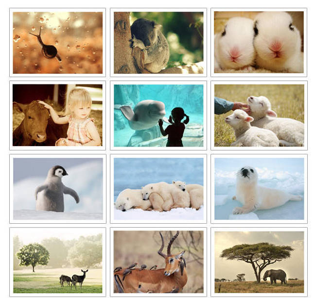 32 Sheet 1 Set 140*100 mm Post Card Format Gift Greeting Cards Photos The Nature of The Pet