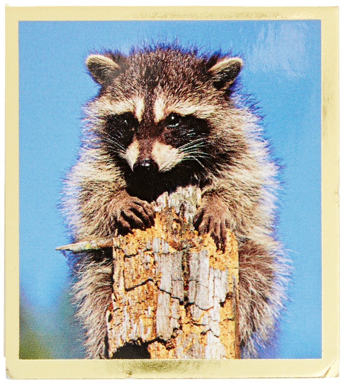Gift Trenz Raccoon Magnetic Bookmark