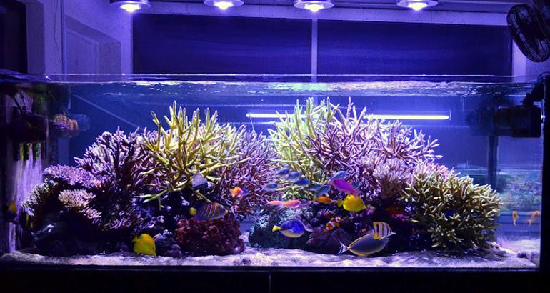 Amazon Top Sellers Bs-57a 120w Par38 Led Aquarium Light For Reef ...